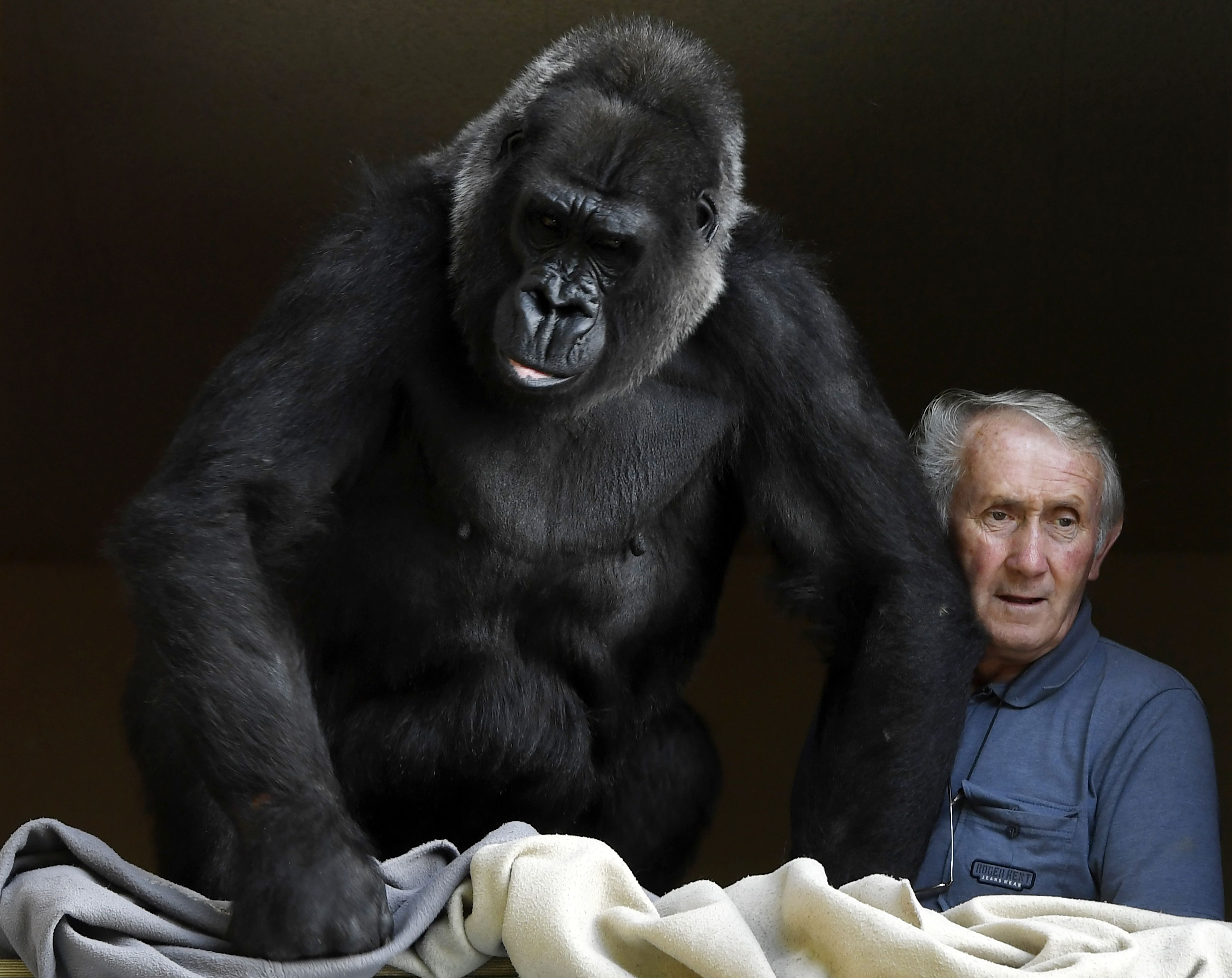Frans stel leeft jarenlang samen met gorilla