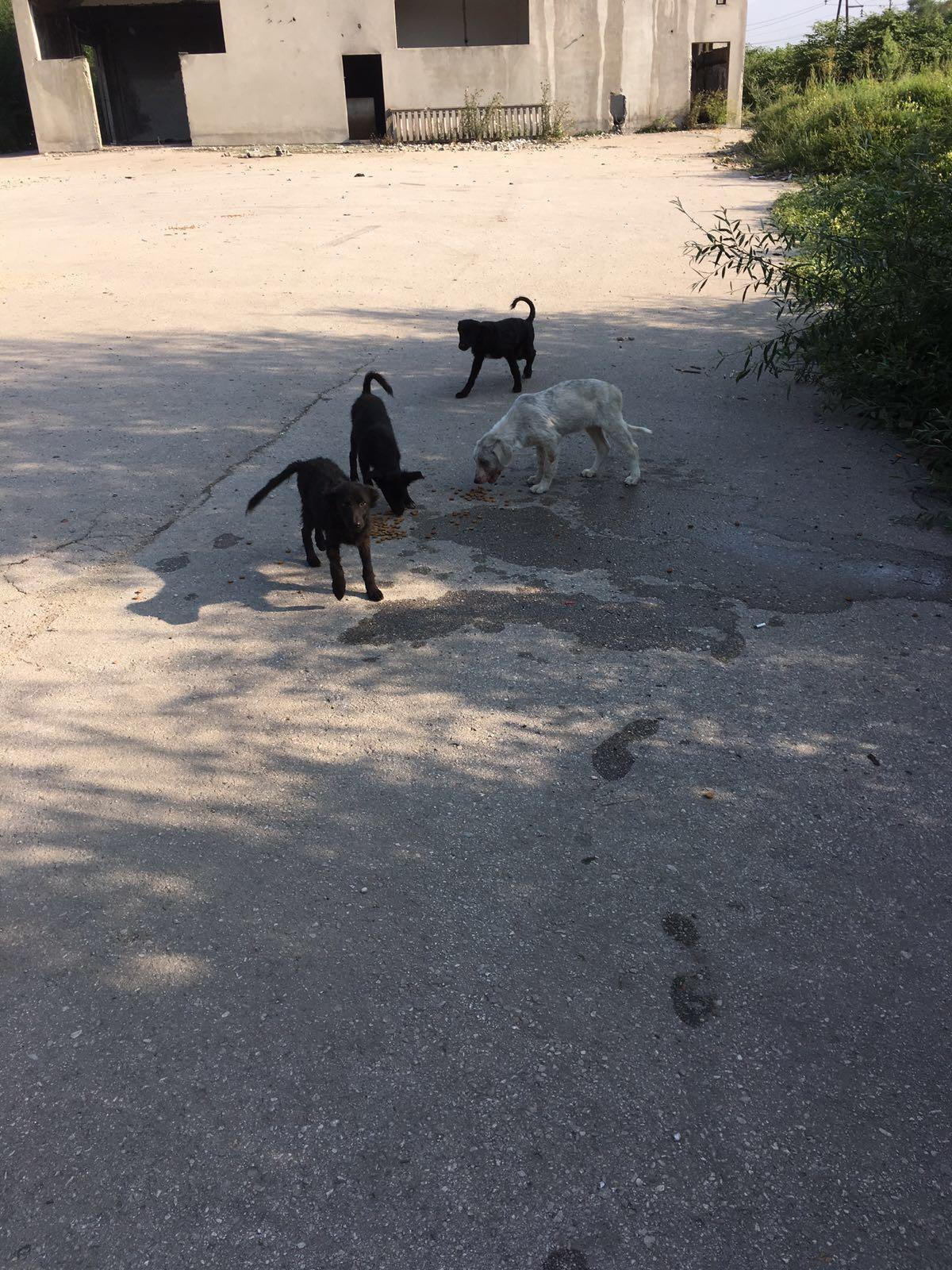 De vier straathonden bij het verlaten pand. / Privébeeld