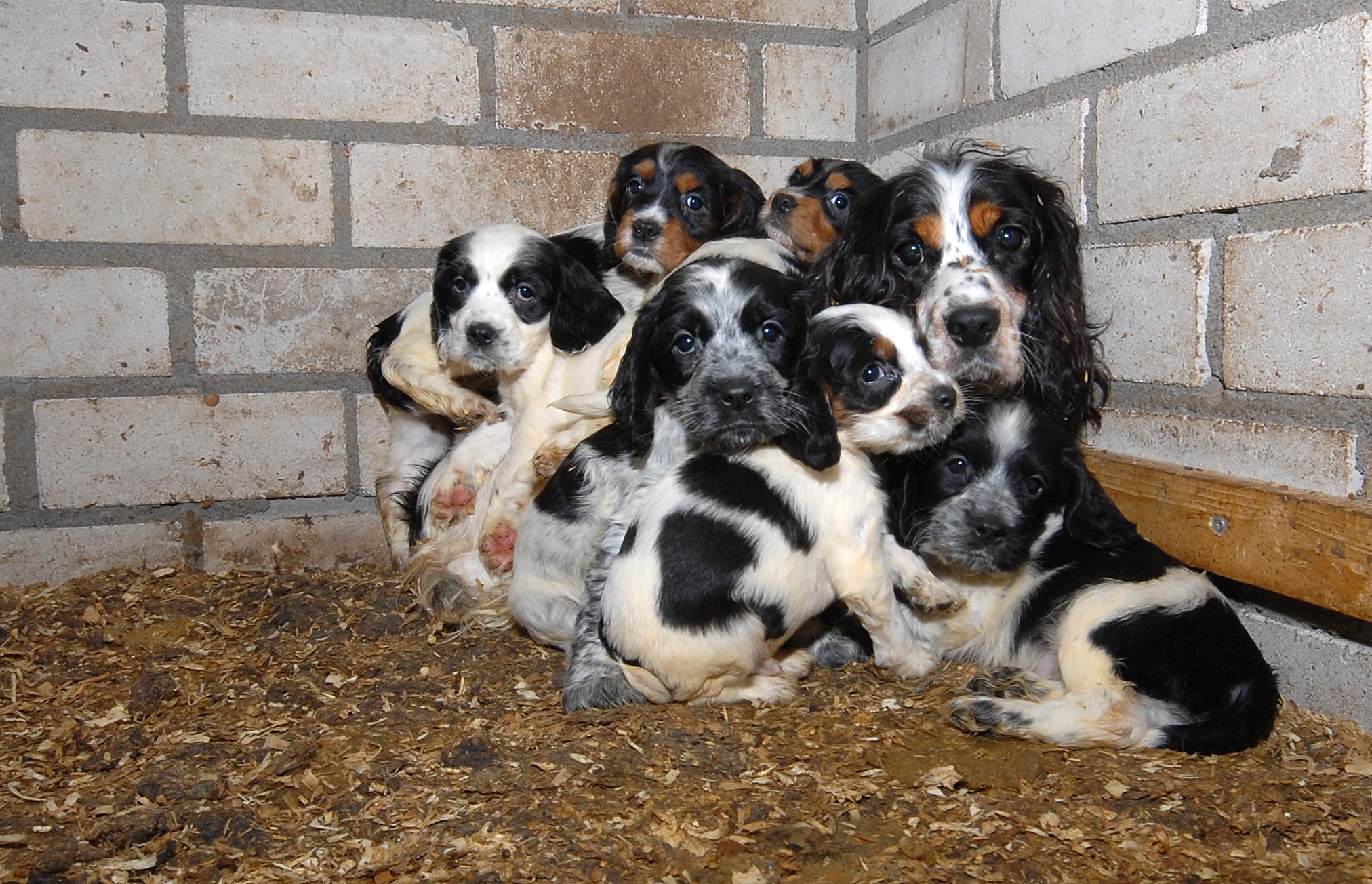 Veel honden zijn niet gesocialiseerd en angstig. Foto: Dierenbescherming