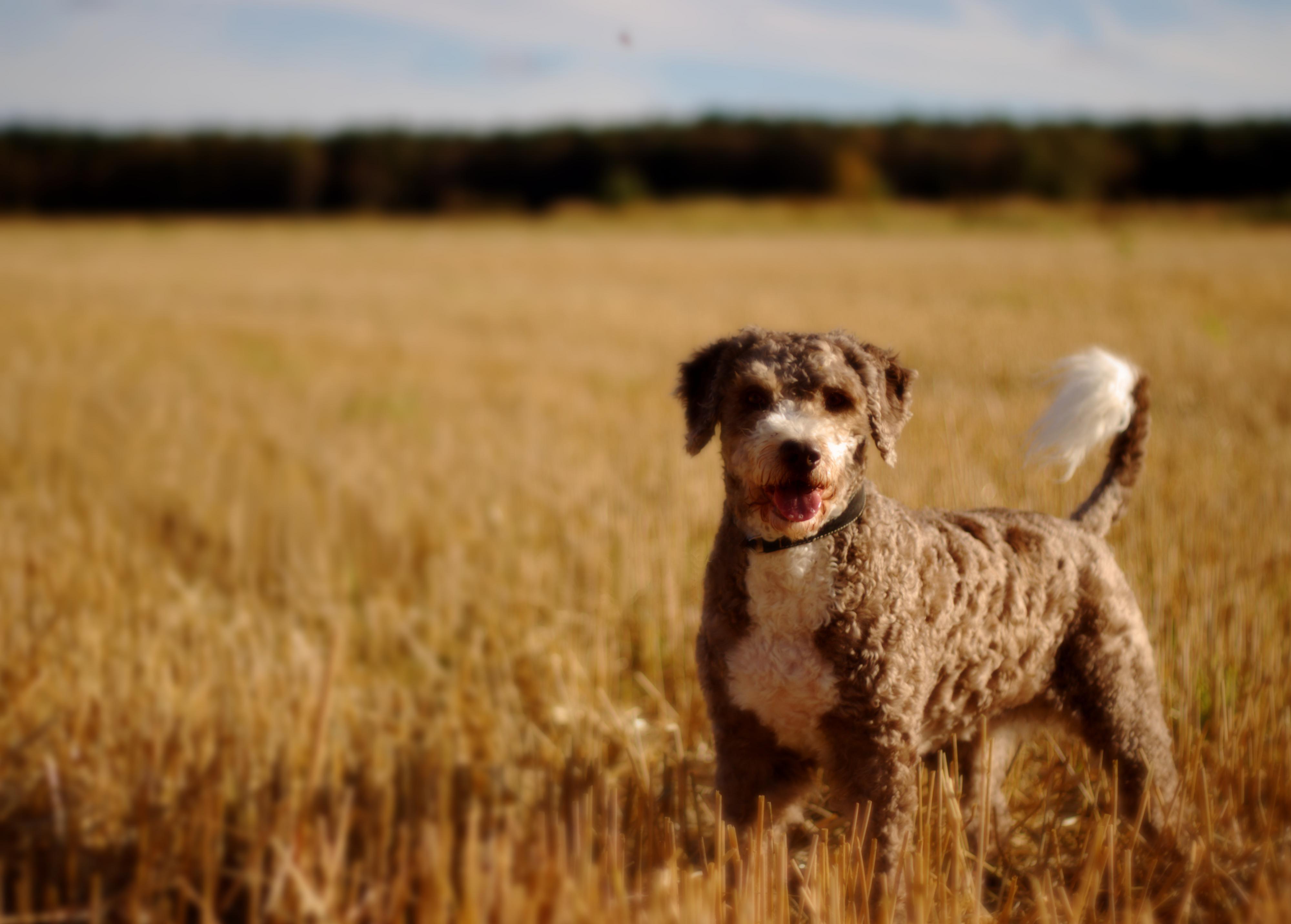 Duitser doet jaren alsof zijn hond een schaap is