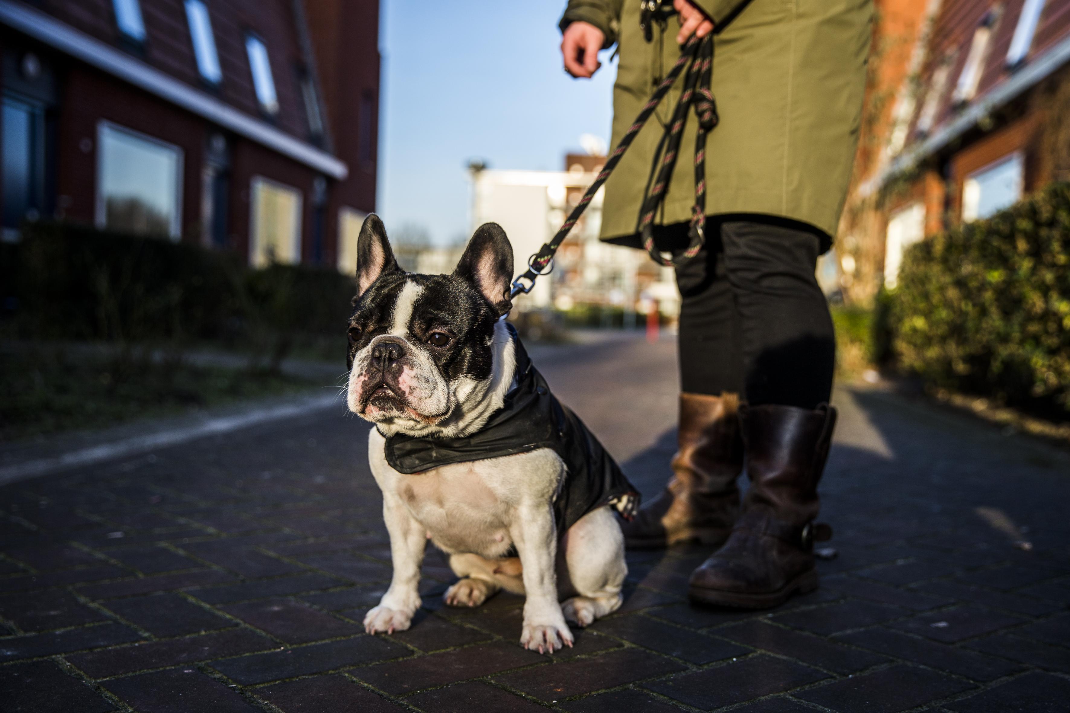 Met een hond naast je ervaar je minder stress. Foto: ANP