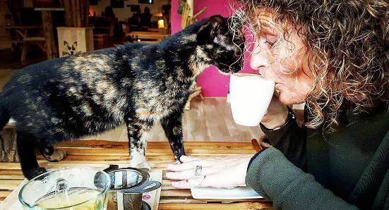 Foto: Instagram/pebbleskittycatcafe