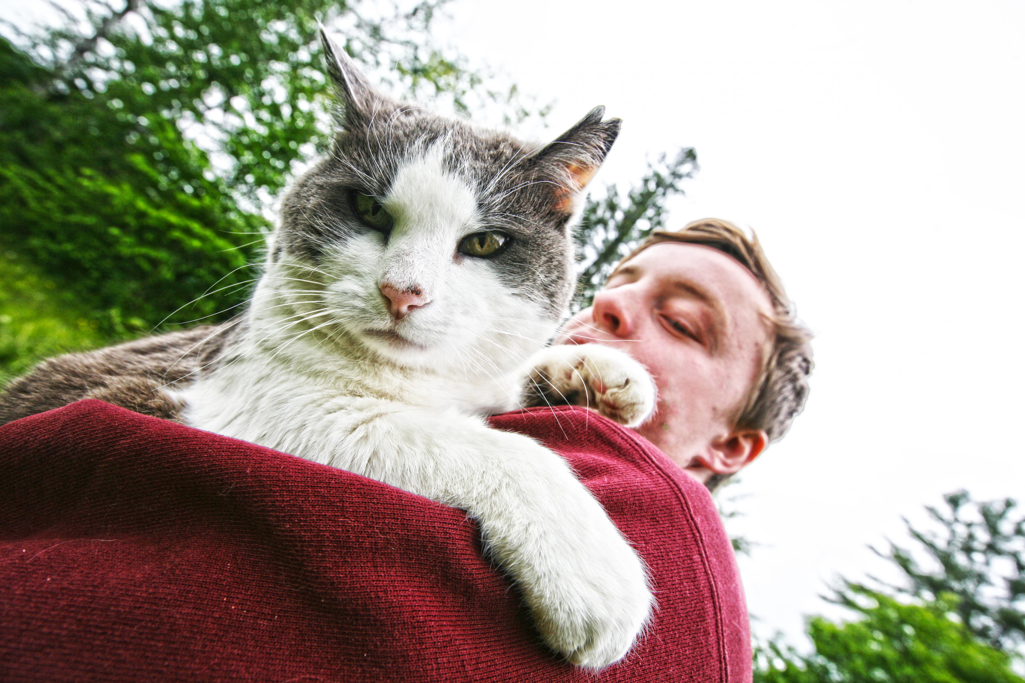 Yoga met katten is veel gezelliger. Foto: Sterling College/ Flickr.com