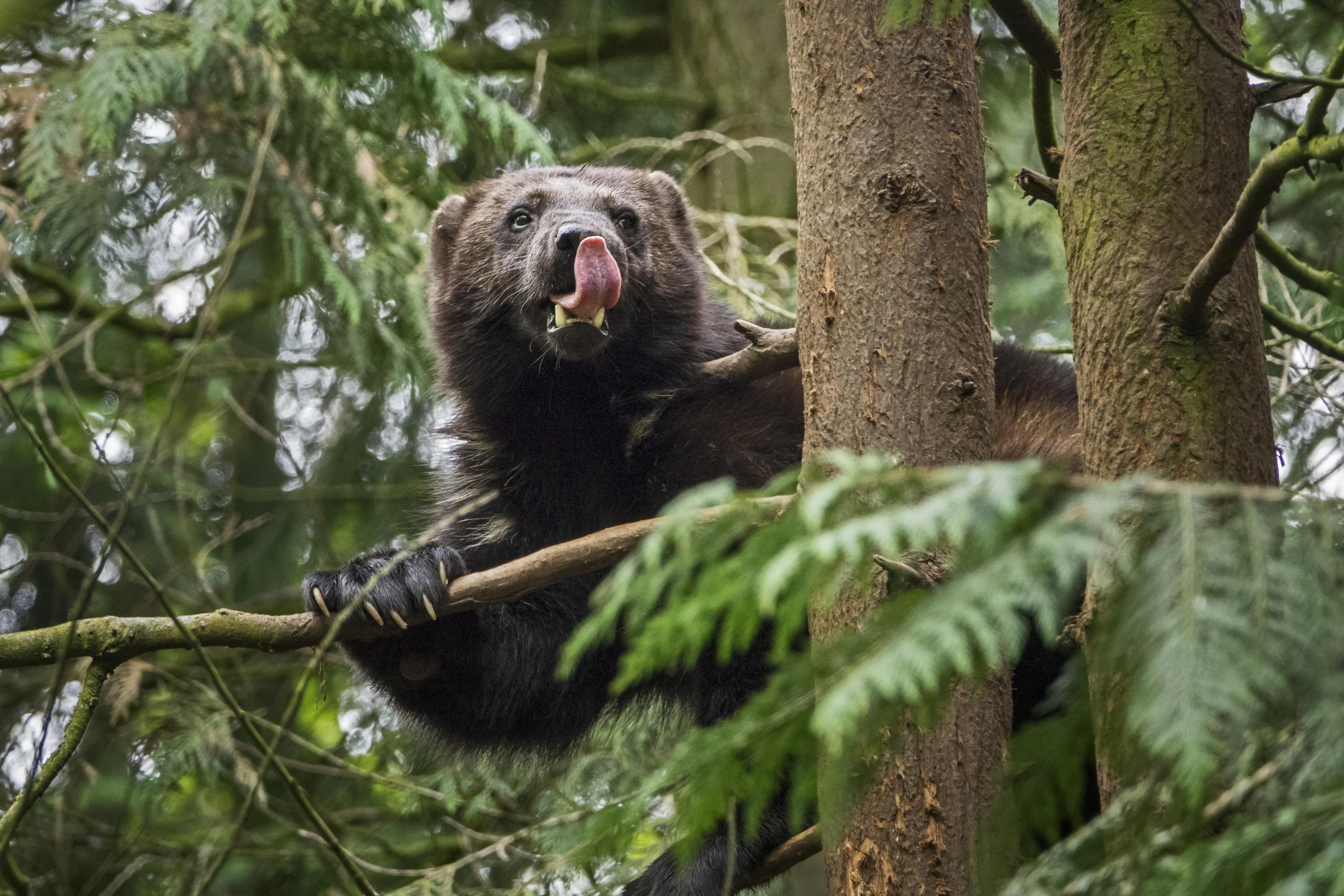 Fotografen leggen bedreigde diersoorten vast