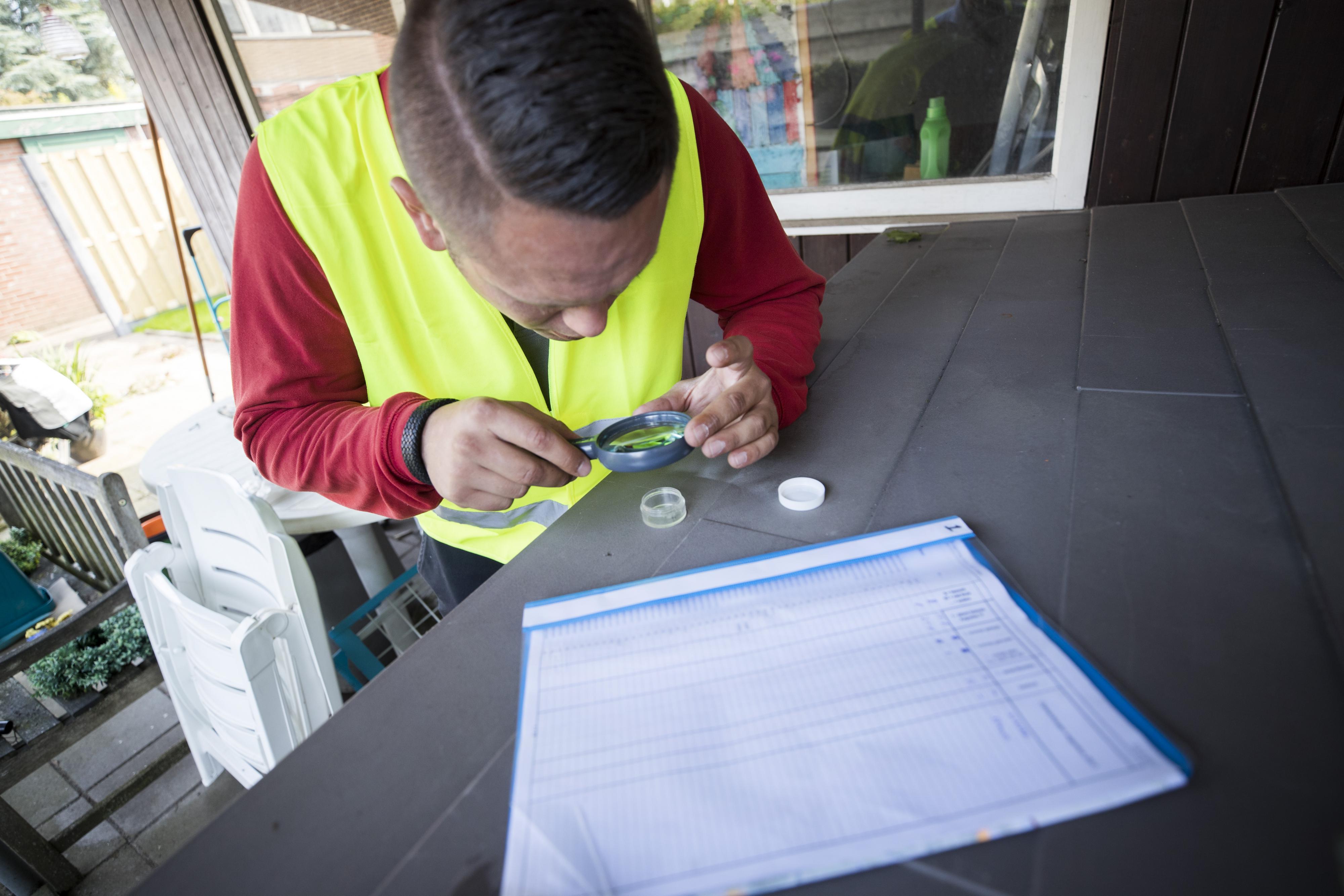 edewerkers van de NVWA gaan alle huizen langs in een wijk in Aalten waar de Aziatische tijgermug is aangetroffen. Ze checken elke tuin op plekken waar de mug eitjes gelegd zou kunnen hebben. Foto: ANP / Jeroen Jumelet