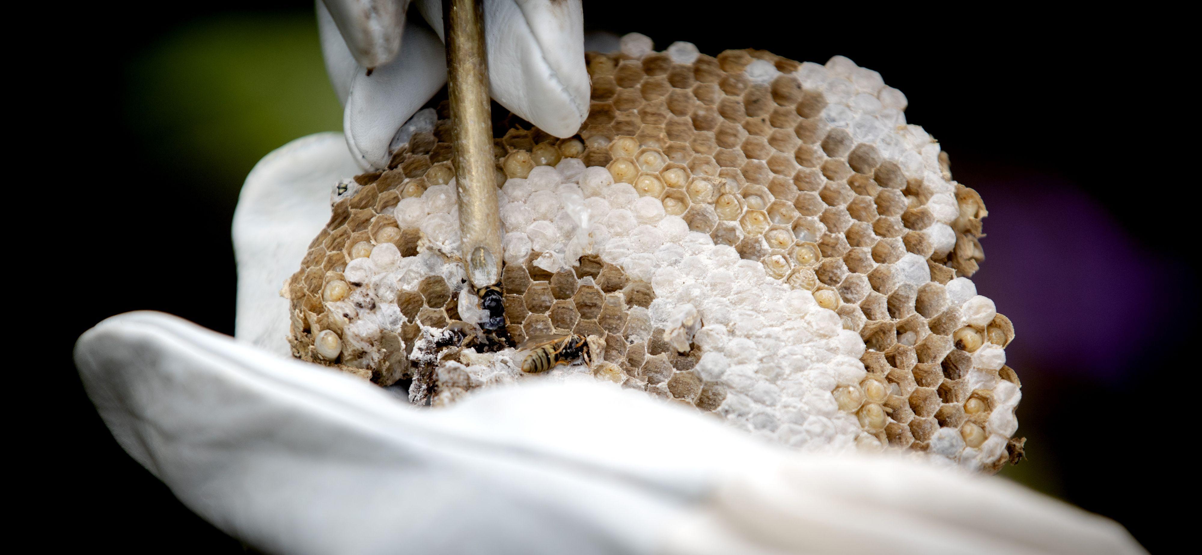 Wat kun je doen tegen wespen?