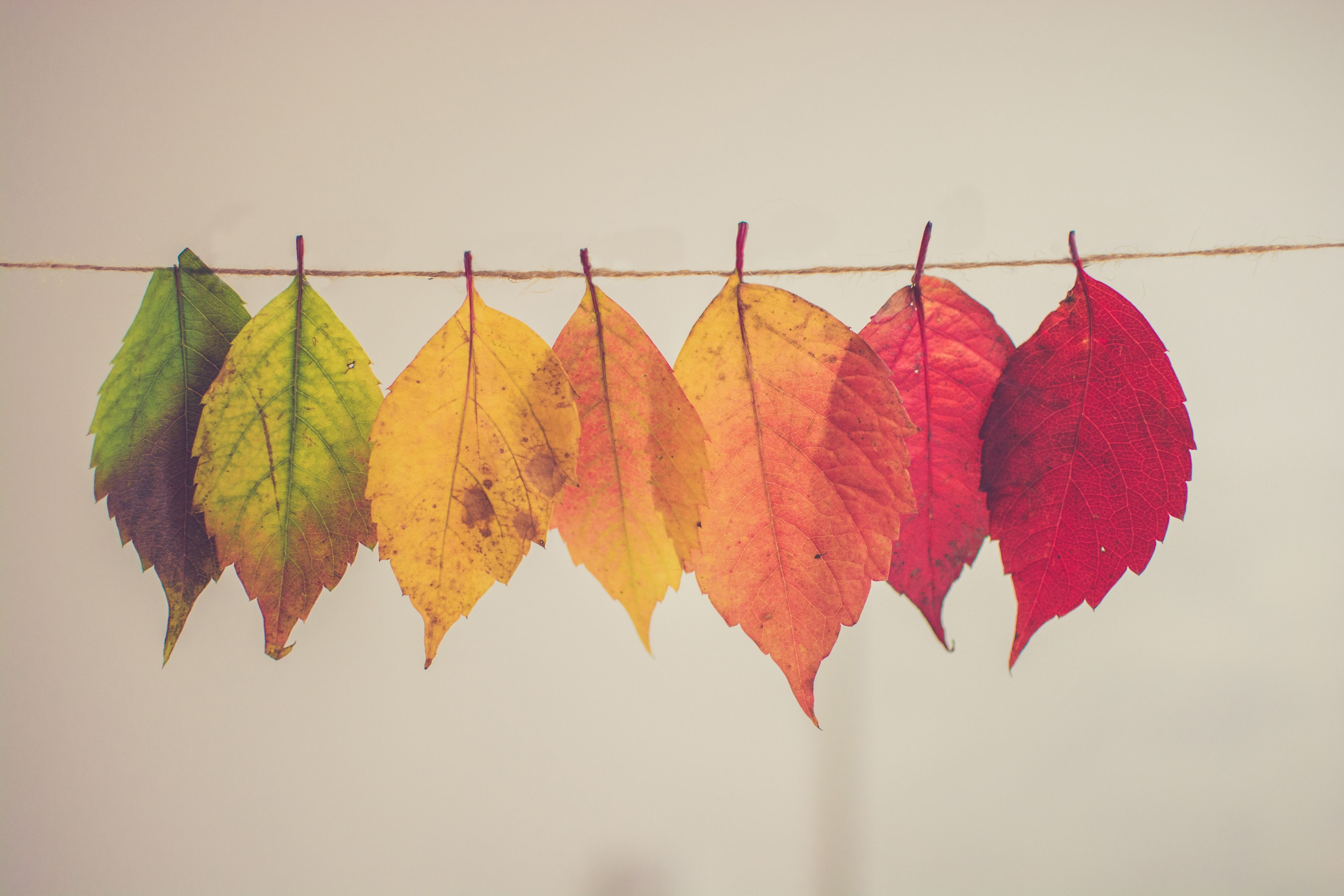 Het is bijna herfst! Of is het gedaan met de vier seizoenen?