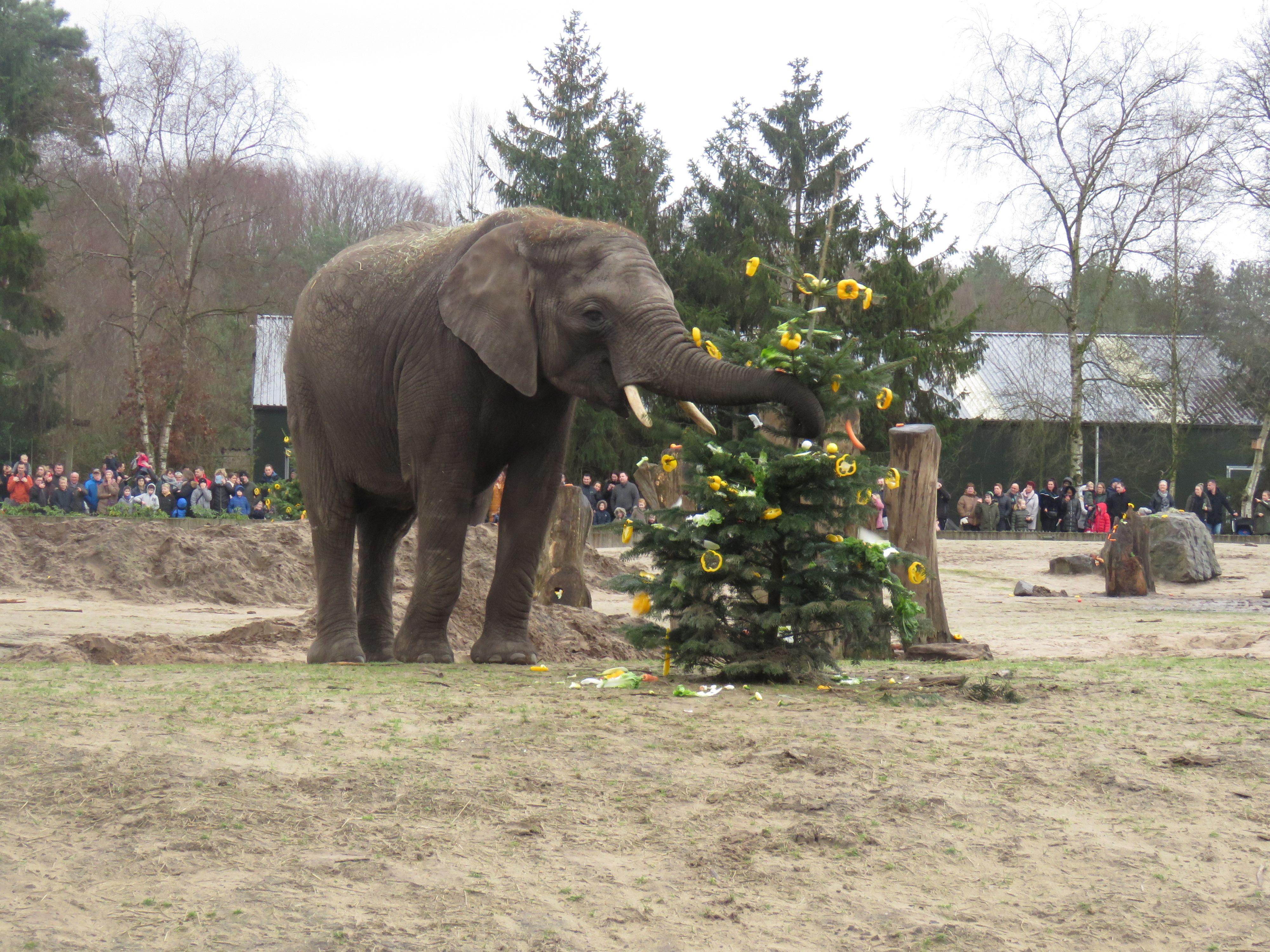 Kerstdiner dieren Beekse Bergen