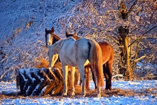 Dierenorganisaties: Zet paarden in de kou
