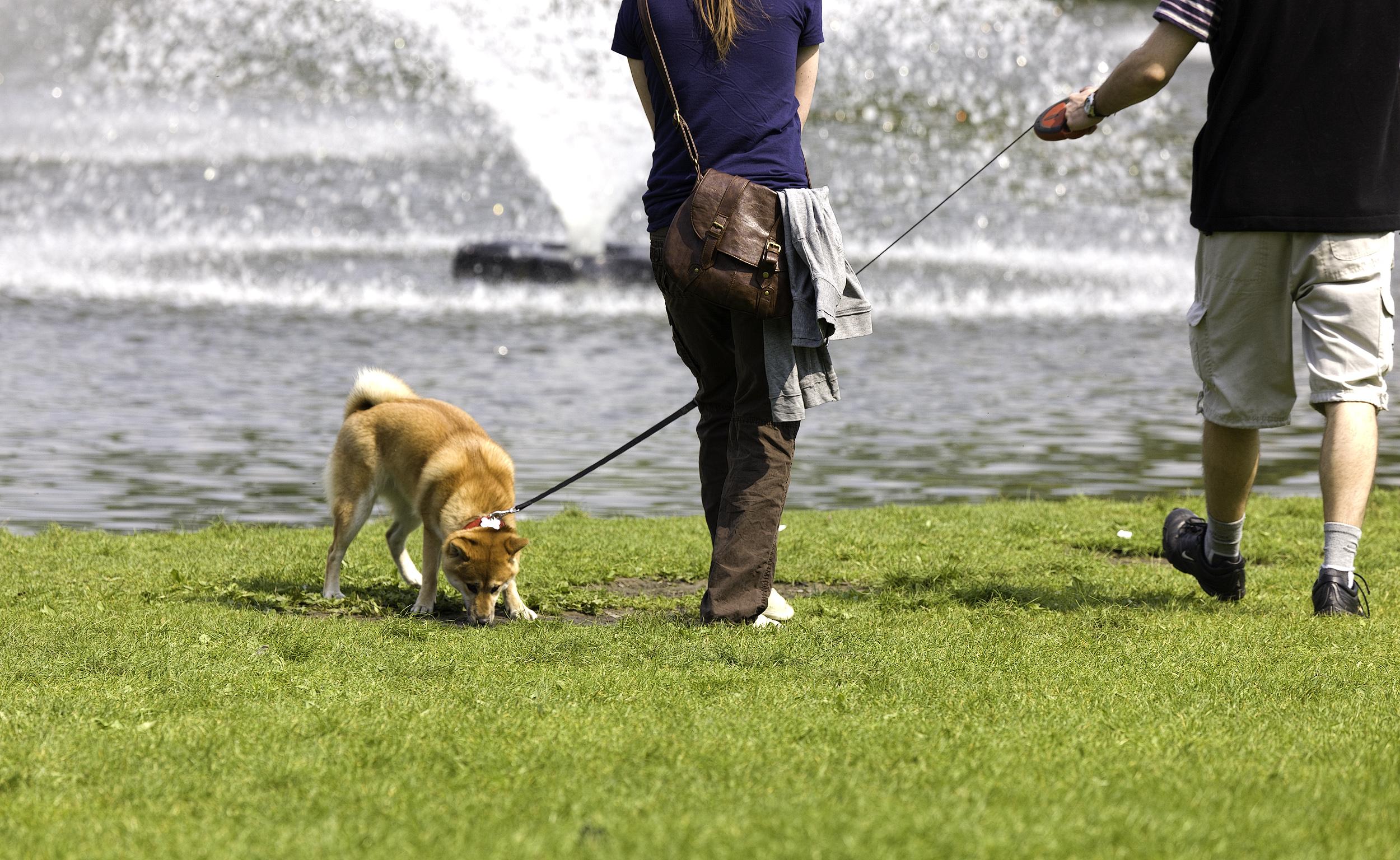 De mooiste Nederlandse parken om je hond uit te laten