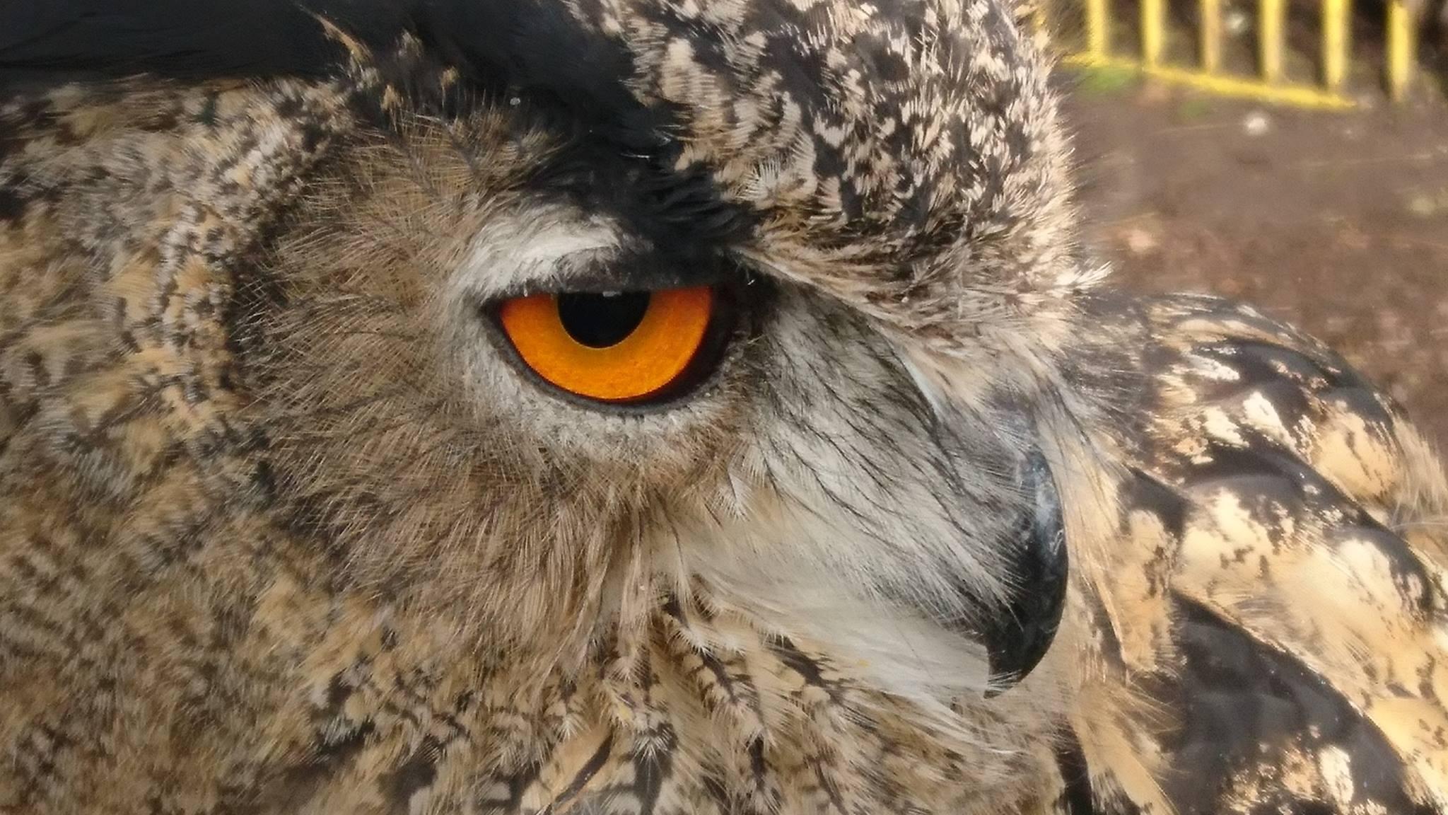 Foto van een uil