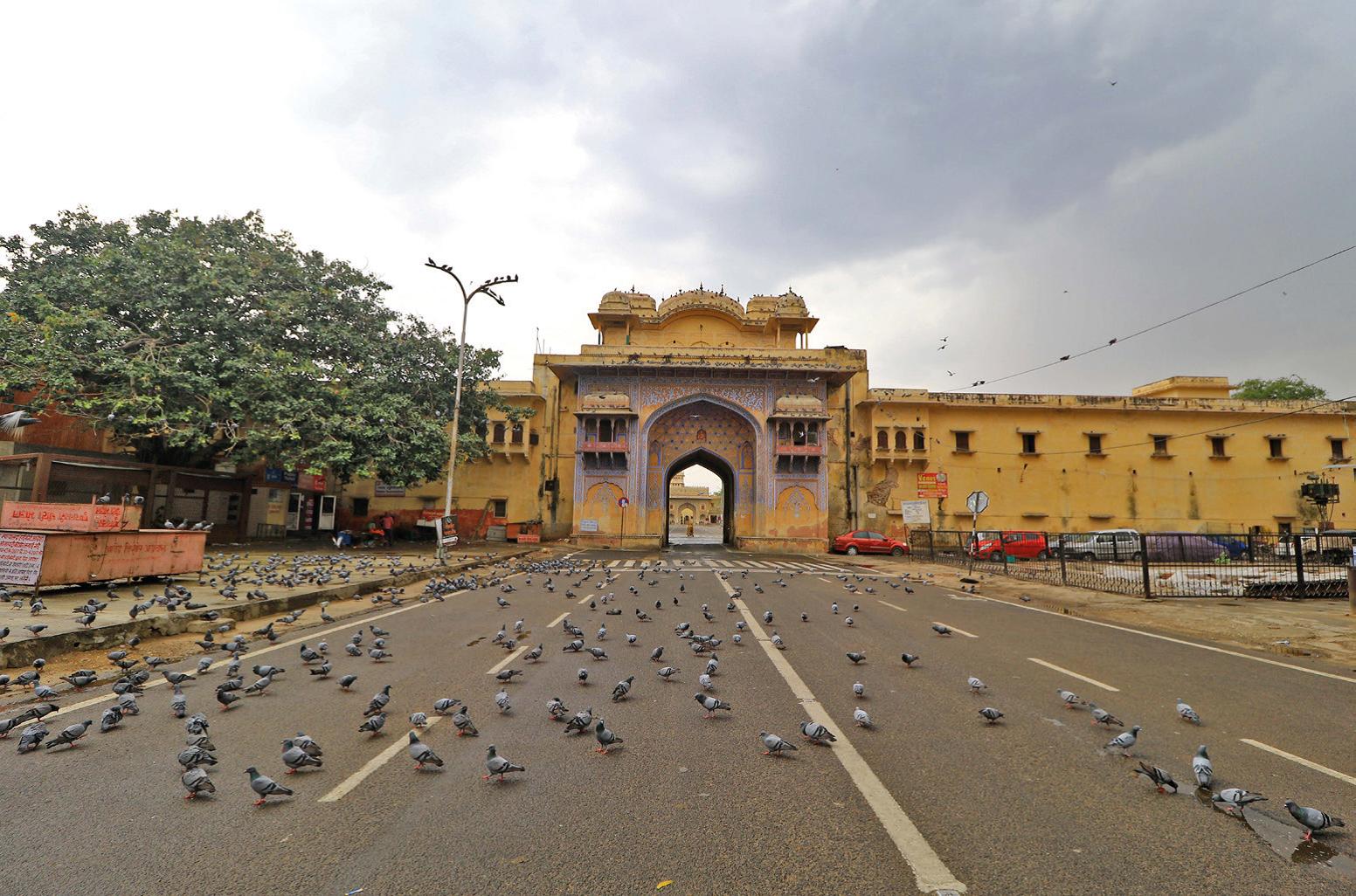 Een foto van vogels op de weg in India