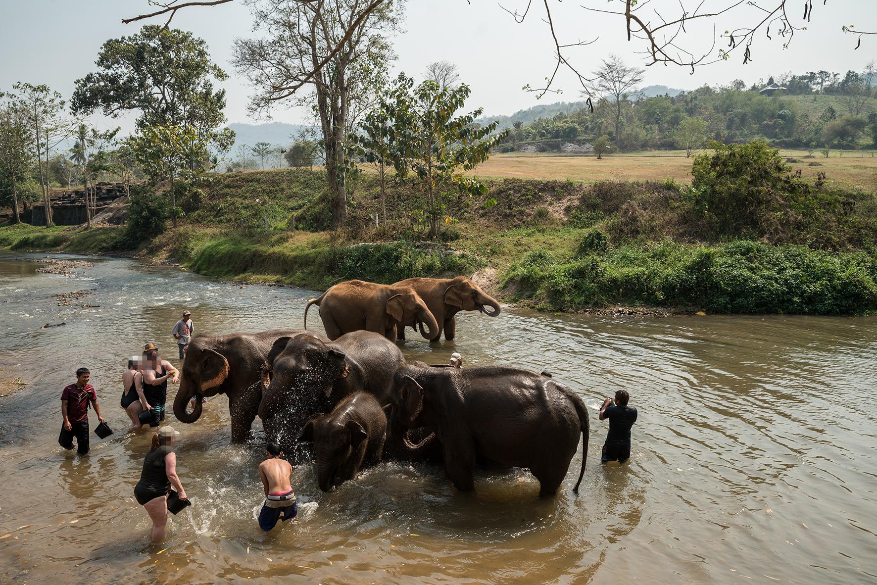 Op deze foto zie je toeristen met olifanten in Thailand