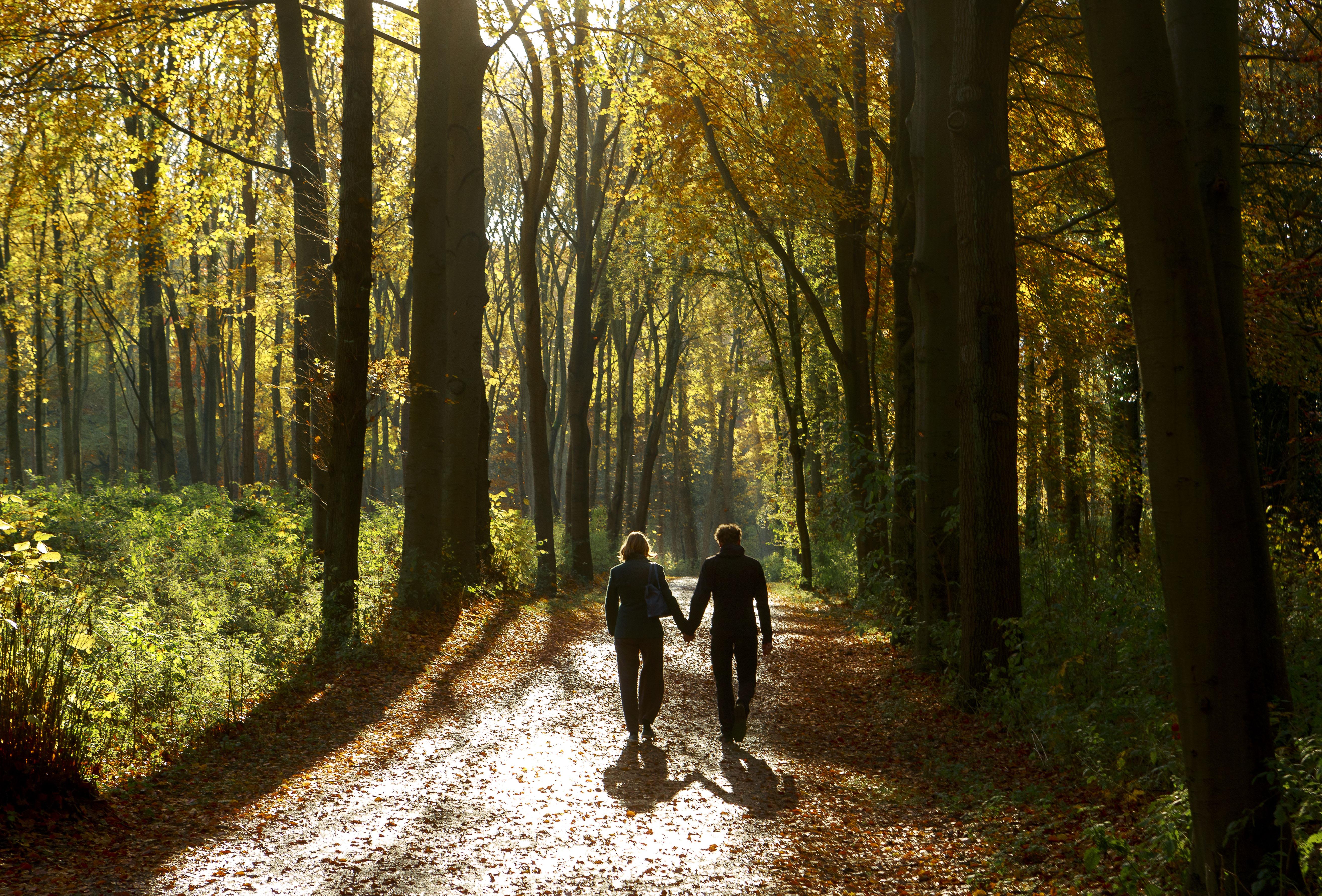 Een foto van twee wandelende mensen in het bos