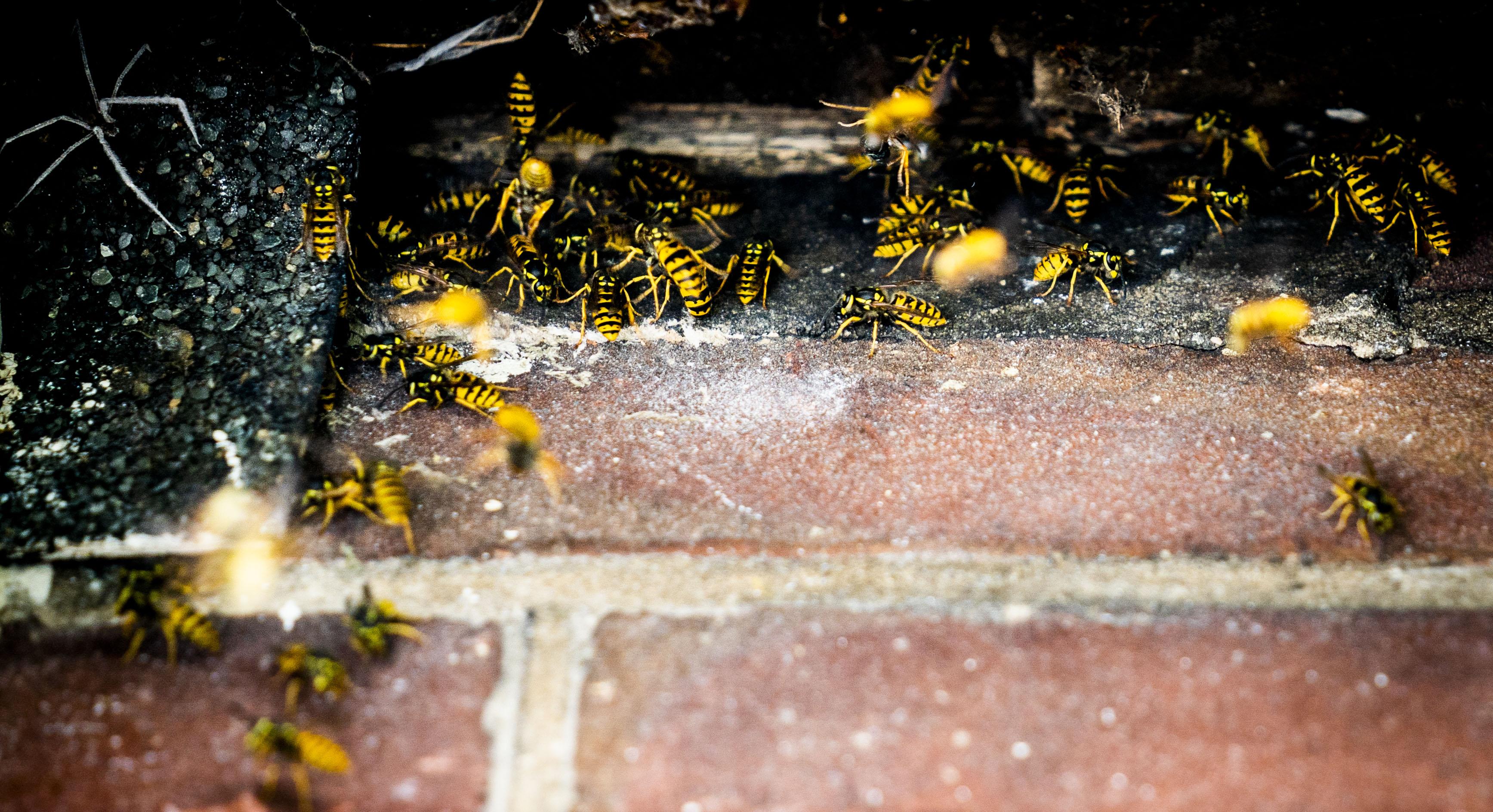 Een foto van een wespennest