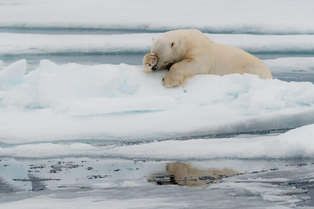'La mentation' © Jacques Poulard / Comedy Wildlife Photo Awards 2020