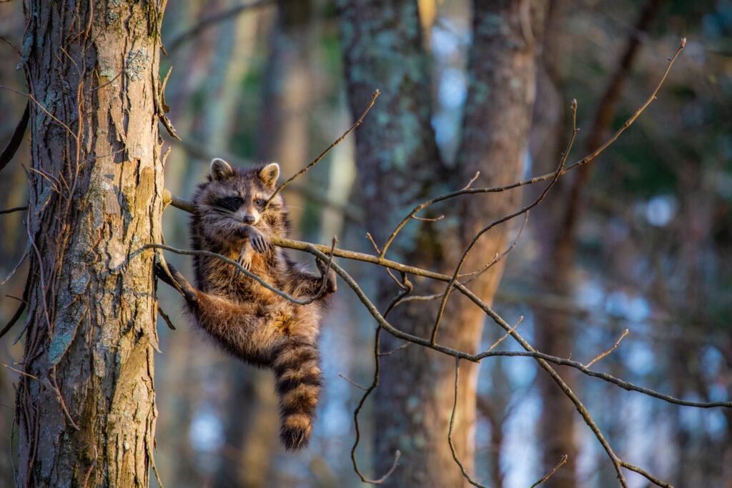 'Just Chillin' ©Jill Neff / Comedy Wildlife Photo Awards 2020