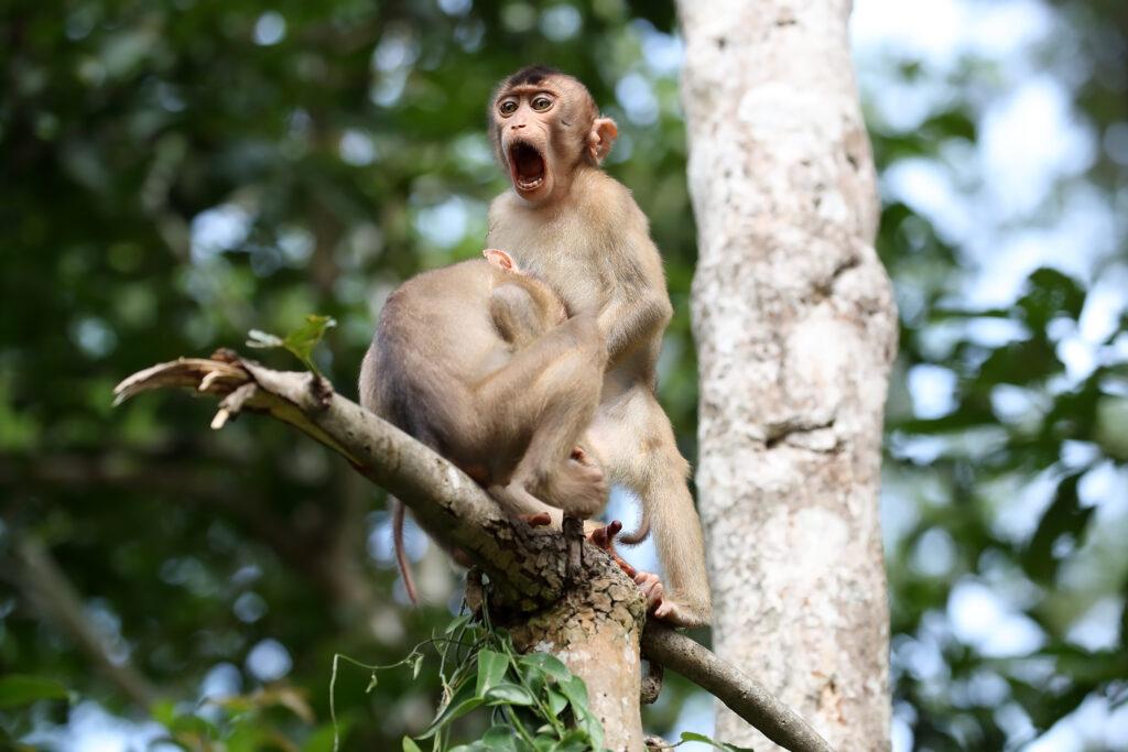 'Monkey Business' © Megan Lorenz / Comedy Wildlife Photo Awards 2020