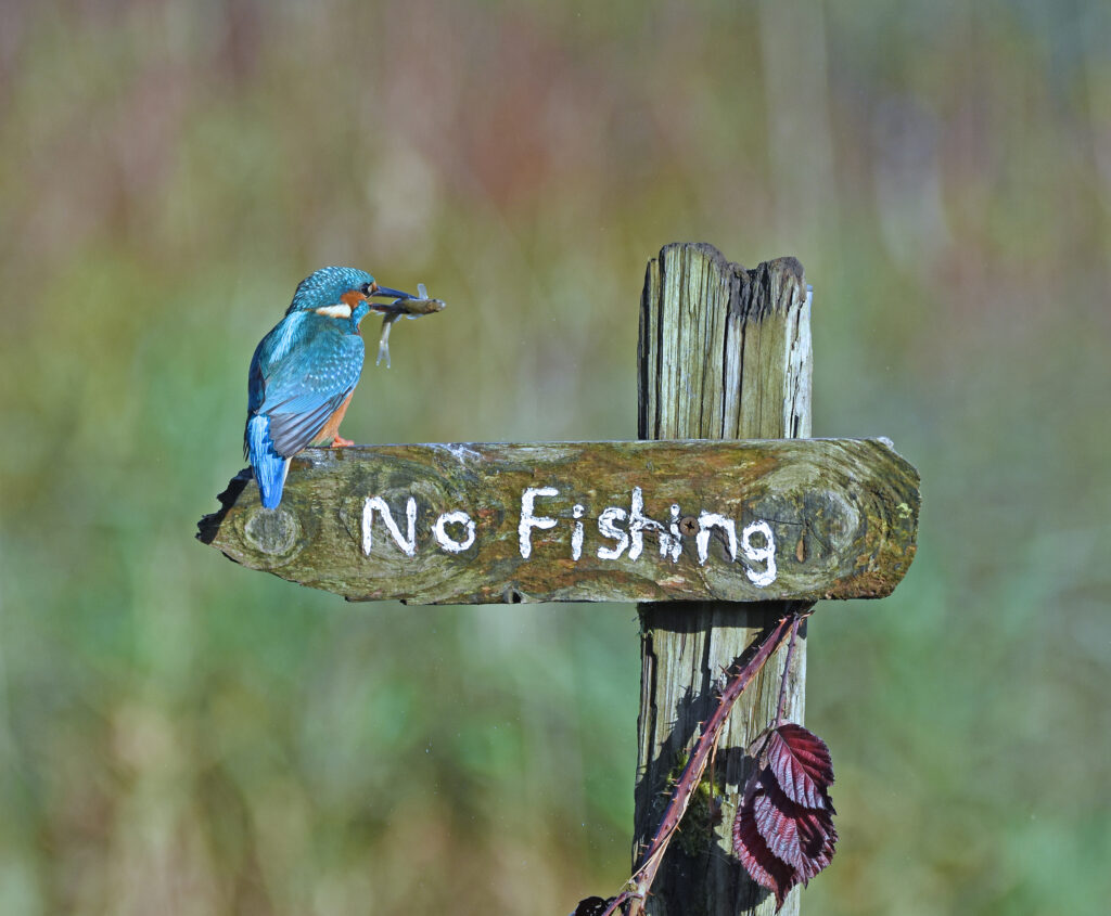 'It's a mocking bird' © Sally Lloyd Jones / Comedy Wildlife Photo Awards 2020