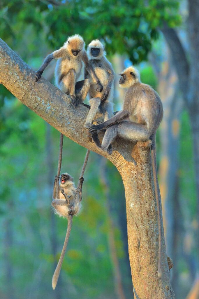 'Fun for all ages' © Thomas Vijayan / Comedy Wildlife Photo Awards 2020