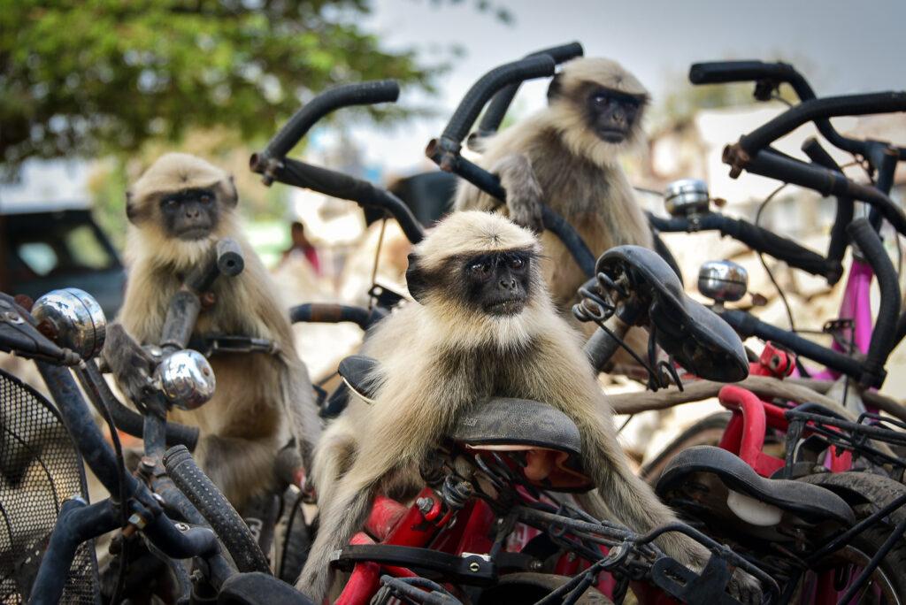 'The race' © Yevhen Samuchenko / Comedy Wildlife Photo Awards 2020