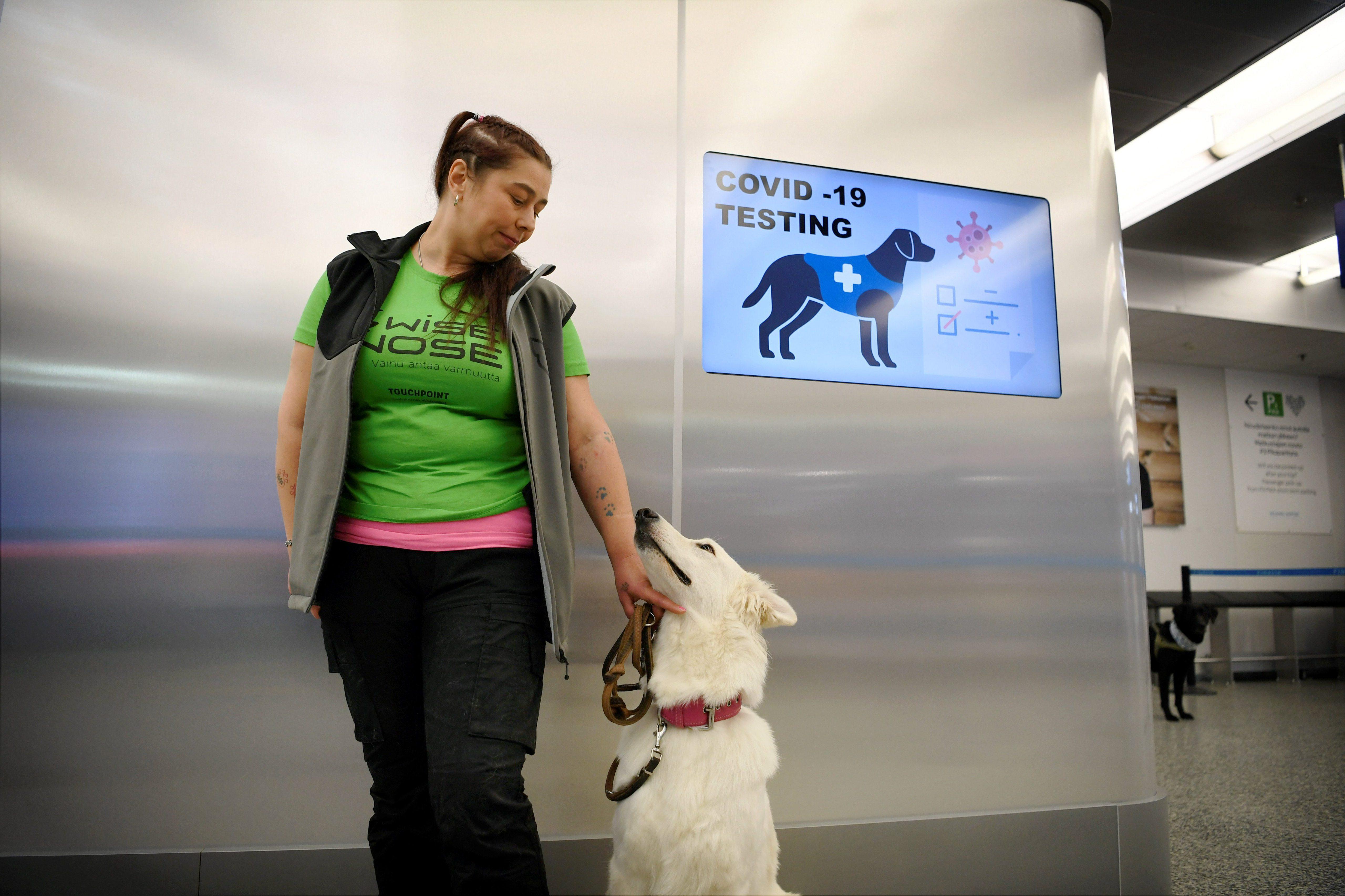 Op deze foto is een van de coronahonden te zien, naast zijn trainer op het vliegveld.