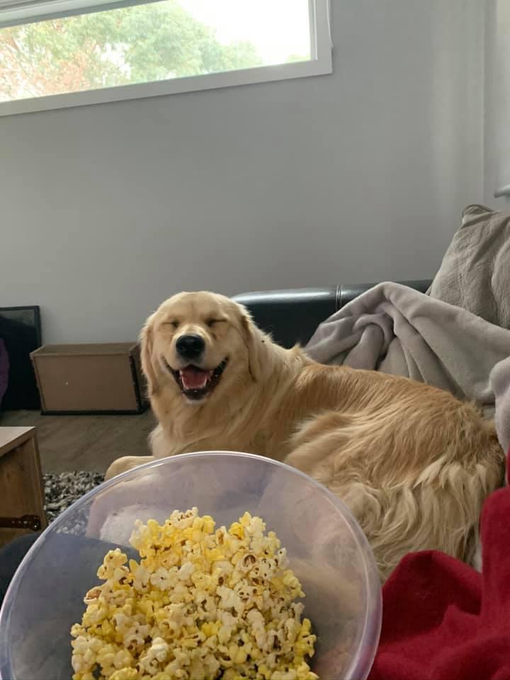 Hartverwarmende honden-challenge, 'zeg maar cheese'